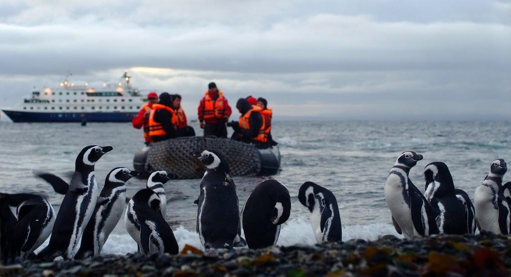 Pinguinos-Stella